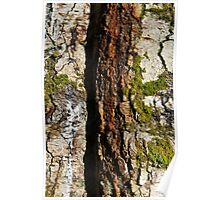 A crack in the Bark, Woodstock Demense, Inistioge, County Kilkenny Poster
