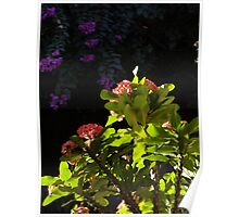 Plants And Flowers In Sunlight And Shade - Plantas Y Flores En La Luy Del Sol Y La Sombra Poster