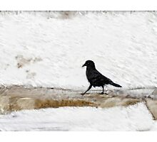 Black Crow Photographic Print