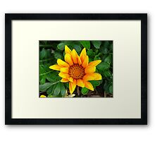 The Sun in Flora Framed Print