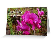 Everlasting Pea Greeting Card