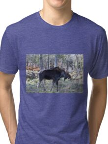Male moose in the woods Tri-blend T-Shirt