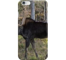 Moose in the fall woods iPhone Case/Skin