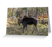 Moose in the fall woods Greeting Card