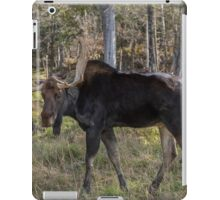 Moose in the fall woods iPad Case/Skin