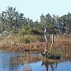 Buxton Salt Marsh - Outer Banks NC  by MotherNature