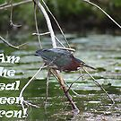 I am the real Green Heron! by Thomas Murphy