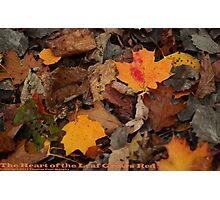 The Heart of the Leaf Grows Red Photographic Print