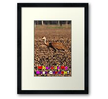Where Is My Rose Garden? Framed Print