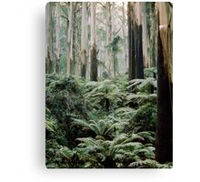 Mountain Ash and Tree Ferns, Sherbrooke Forest. Canvas Print