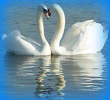 Mute swans displaying by Meladana