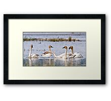 I Am Tired Of Sticking My Neck Out For You ! Framed Print