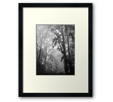 Mountain Ash in the Mist Framed Print