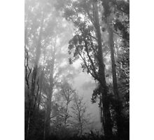 Mountain Ash in the Mist Photographic Print