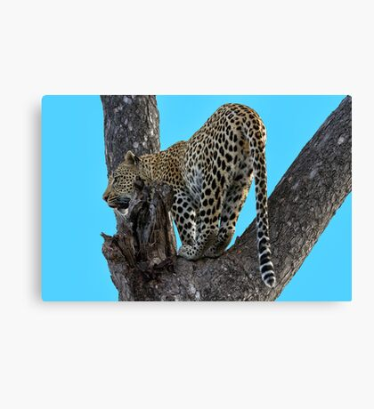 Great View ! Canvas Print