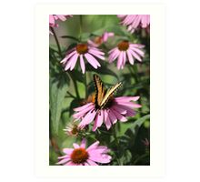 Echinacea with Butterfly 8835 Art Print
