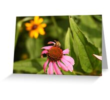 Echinacea with Bee 8670 Greeting Card