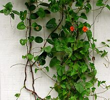 Vine Climber  by Deborah Crew-Johnson