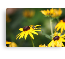 Black Eyed Susan with Beetle 8624 Canvas Print