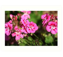 Rhododendron 8813 Art Print