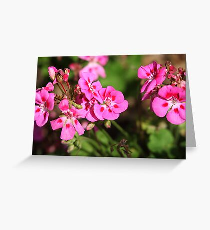 Rhododendron 8813 Greeting Card