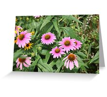 Echinacea 8679 Greeting Card