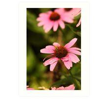 Echinacea with Bee 8674 Art Print