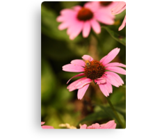 Echinacea with Bee 8674 Canvas Print