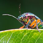 Green Jewel Bug by Teale Britstra