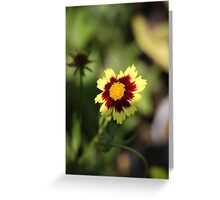 Calliopsis 6775 Greeting Card