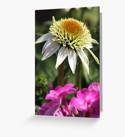 6806 Greeting Card