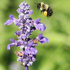 Purple Flower 7005 by Thomas Murphy