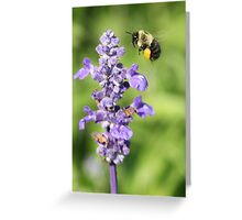 Purple Flower 7005 Greeting Card