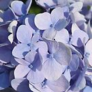 Flower 7011 by Thomas Murphy