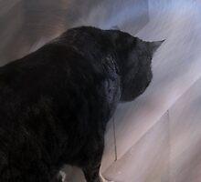 Cat in Silhouette by Jane Underwood