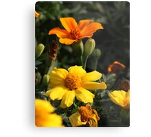 Flower 7130 Metal Print