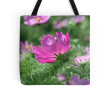 Cosmos Flower 7142 Tote Bag