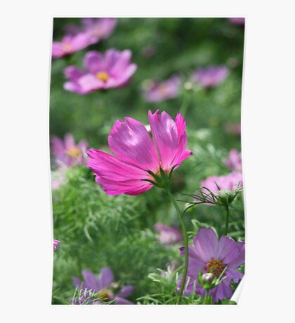Flower 7142 Poster