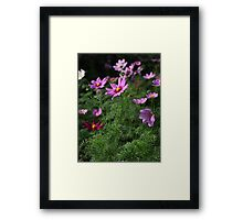 Cosmos Plus 7145 Framed Print