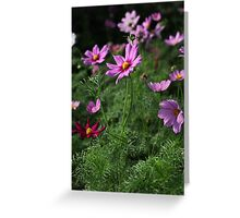 Cosmos Plus 7145 Greeting Card