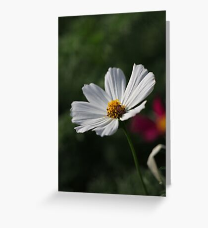 Flower 7156 Greeting Card