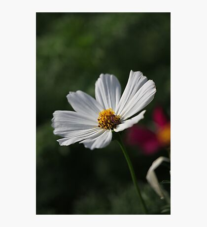 Flower 7156 Photographic Print