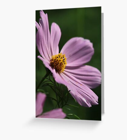 Cosmos 7160 Greeting Card
