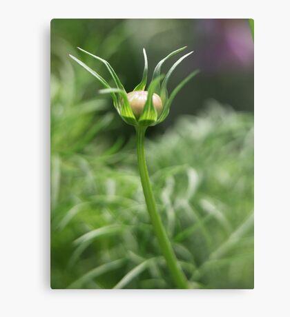 Flower 7163 Metal Print