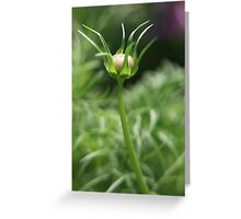 Flower 7163 Greeting Card