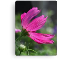 Cosmos Flower 7166 Metal Print