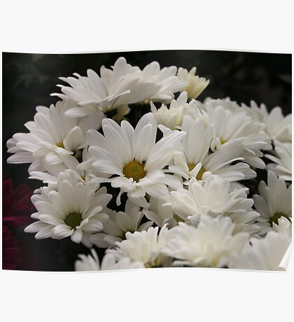Daisy Flowers 7083 Poster