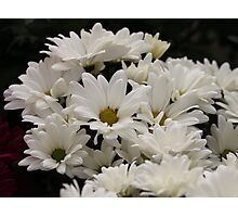 Daisy Flowers 7083 Photographic Print