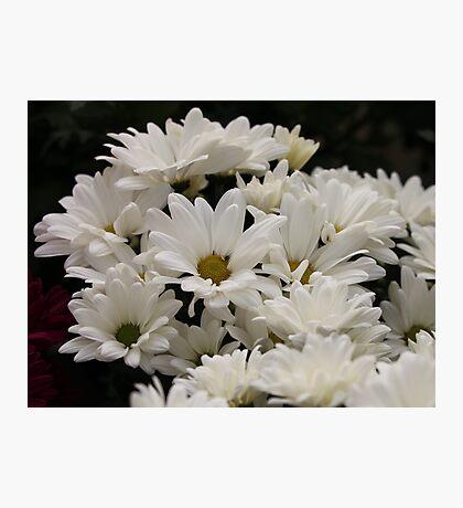 Daisy Flowers 7083 Photographic Print