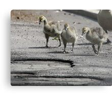 The Gosling Gang Metal Print